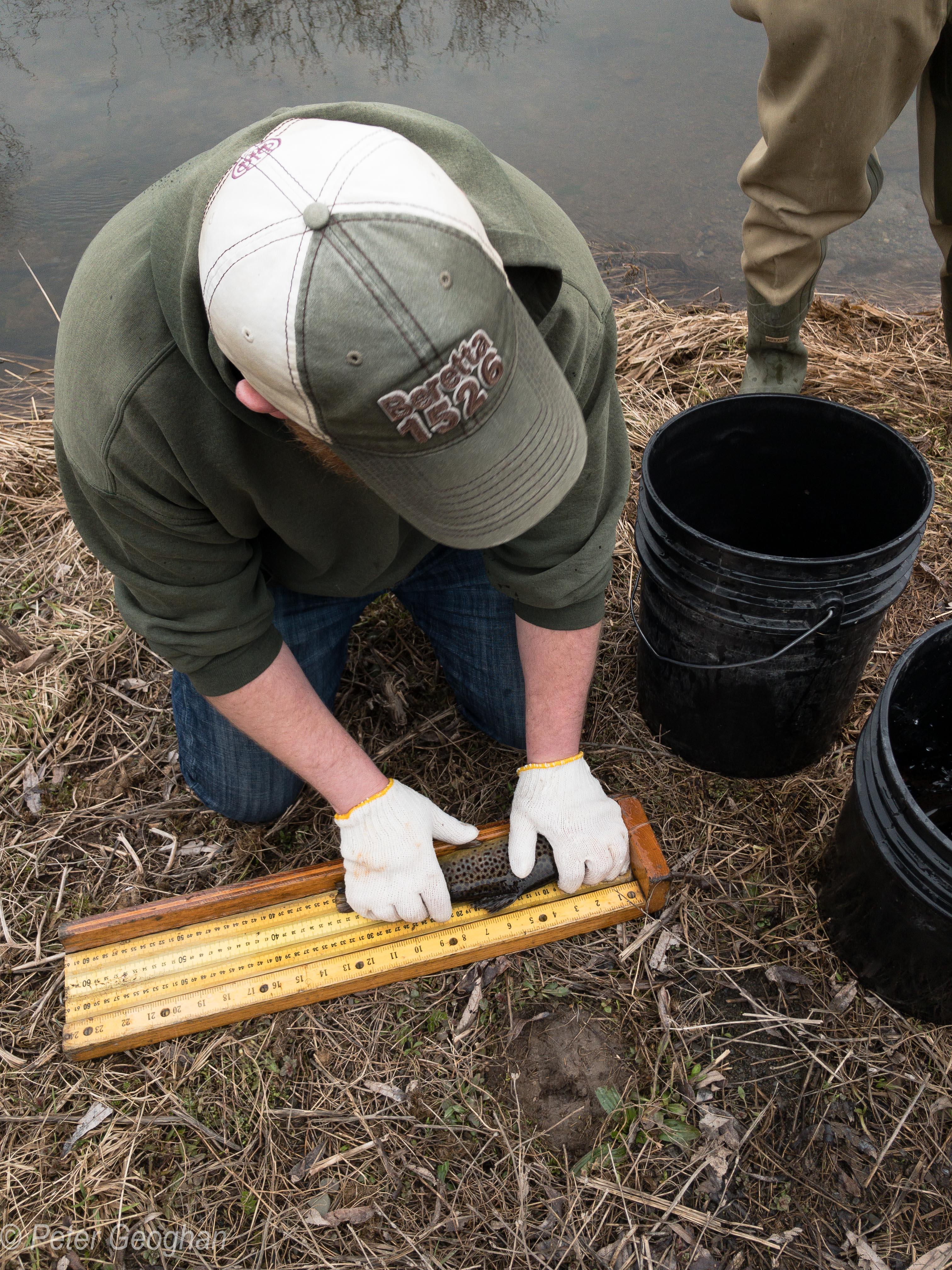 Smaller Catskill Fish Stocking -10.jpg