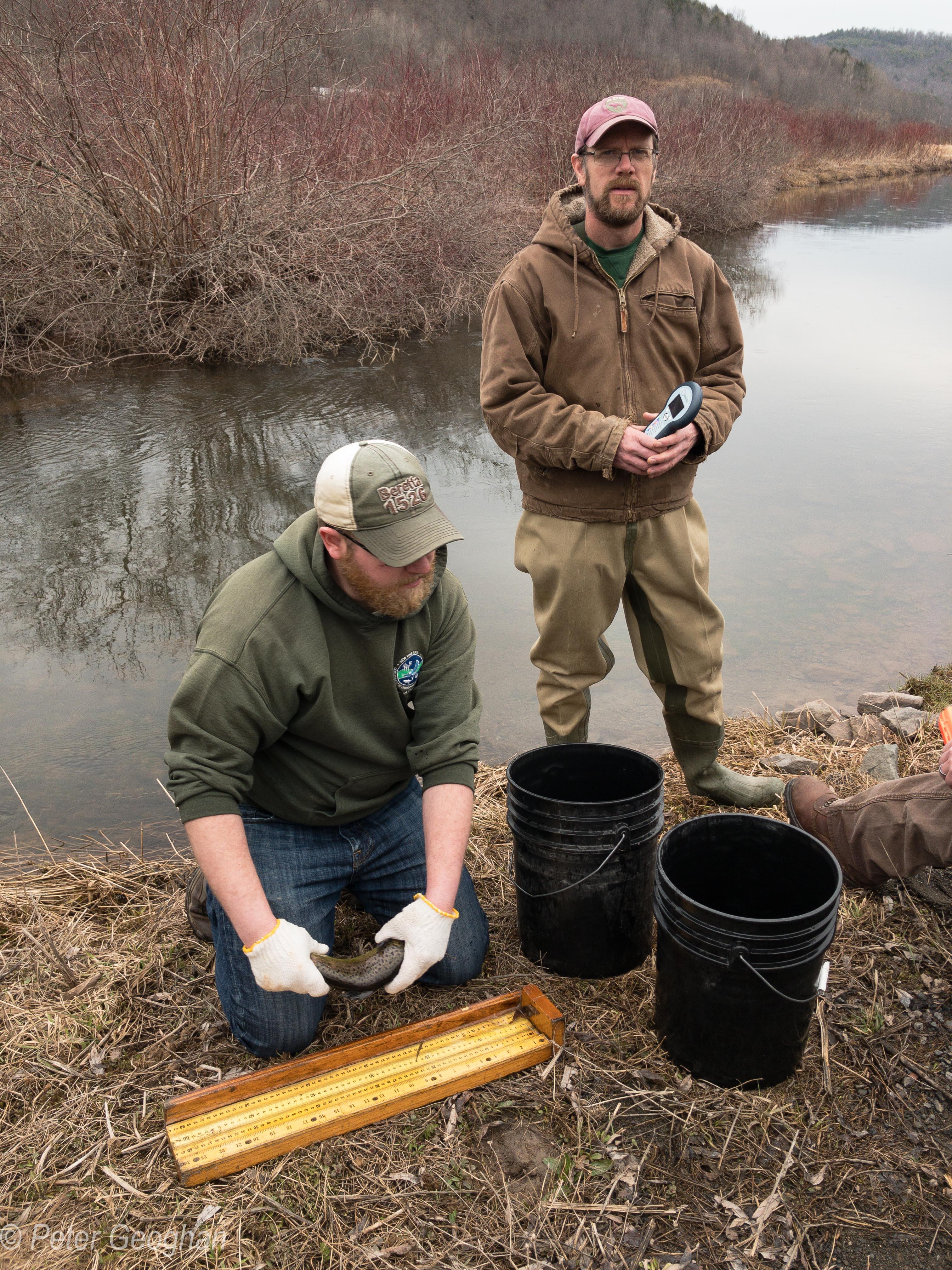 Smaller Catskill Fish Stocking -8.jpg