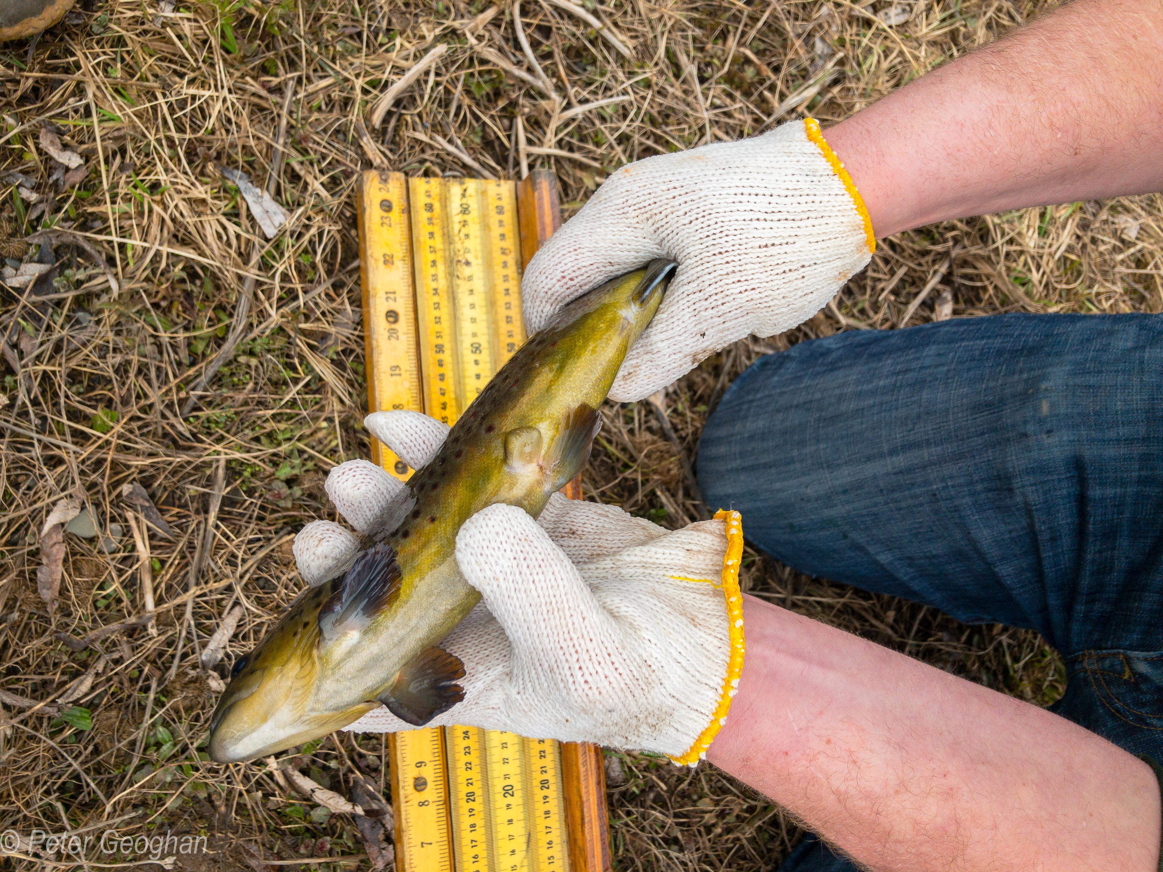 Smaller Catskill Fish Stocking -11.jpg